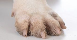 Why Omega-3 Can Help a Dog Who Is Constantly Biting Their Paws