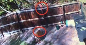 """Dog Survives Poisoning Attempt: """"Cat Lady' Neighbor Caught On Camera"""