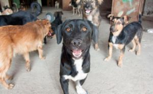 Self-Funded Rescue Gives Stray Dogs Hope In A Country That Shuns Them