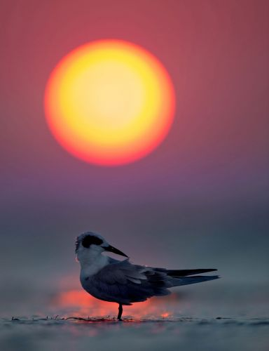 Gallery: Sunset on the Jersey Shore
