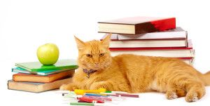 Booklist for Cat Lovers
