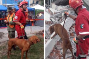 Determined Search And Rescue Dog Saves Lives After Devastating Earthquake