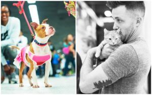 Celebrities & Advocates Watch Shelter Pets Strut Their Stuff At Pawject Runway