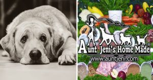 FDA Issues Second Advisory For Aunt Jeni's Home Made Dog Food In A Year - Aunt Jeni's Responds