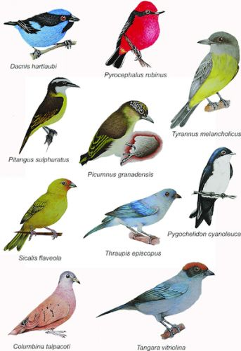WHY ONLY 10,000 BIRD SPECIES?