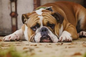 Does Your Stress Impact Your Dog? Science Says Yes!