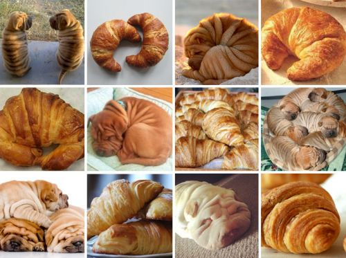National Croissant Day | Winslow Animal Hospital Dog & Cat