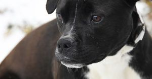 Pup Riddled with Heartworms Recovers in Rescue, Finds Her Family