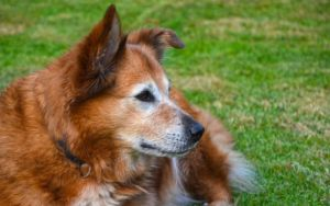 5 Great Tips For Fighting Your Senior Dog's Hearing Loss