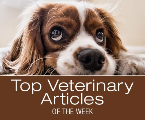 Top Veterinary Articles of the Week: Hematuria, Xylitol, and more