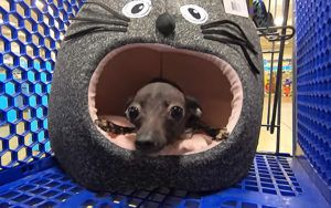 Special Needs Pup and Her Senior Friend Get to Take Home Everything They Touch on Shopping Spree!