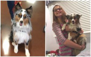 Gluten-Detecting Dog Changes The Life Of A Girl With Celiac Disease