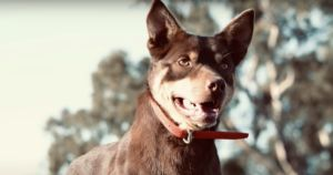 World's Most Valuable Working Dog Sells For Record-Breaking Price