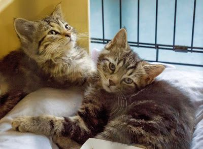 Double Trouble? Think Again!: Benefits of Adopting a Pair