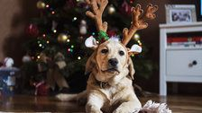 These Holiday Plants Can Be Hazardous For Pets