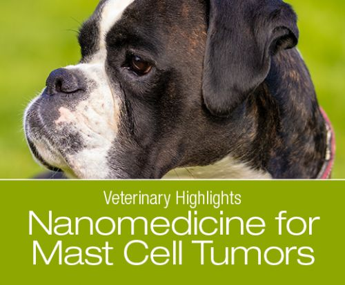 Veterinary Highlights: Nanoshell Therapy to Treat Mast Cell Tumors