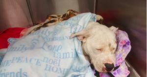 Justice Is Served: Man Charged For Dragging Dog Behind His Truck