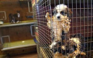 California Pet Stores Can Only Sell Shelter Animals Thanks To First-Of-Its-Kind State Law