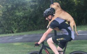 Kind-Hearted Cyclist Pedals Injured Stray Puppy To Safety
