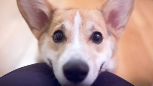 Your Dog Making A 'Sad Puppy Face' May Be Trying To Tell You Something
