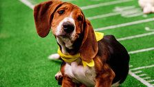 Go Behind The Scenes Of Puppy Bowl XV In These Oh-So-Adorable Photos